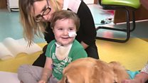 Therapy dog Leo helping patients recover