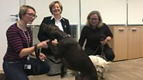Nestle: Dogs are workplace 'stress busters'