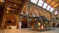 Watch: Dippy the Dinosaur prepares for a national tour