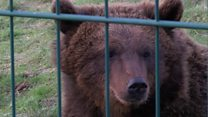 First look at brown bears in Dundee