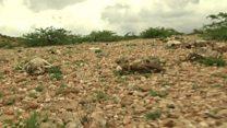Abaarta Somaliland oo gaartay meel halis ah