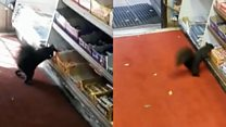 Las ardillas ladronas que roban chocolates en Toronto