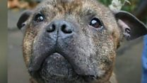 Staffordshire bull terrier Butch gets execution reprieve