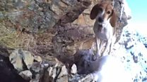 Can scaredy dog stuck on cliff be saved?