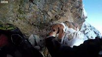 美国救援人员悬崖救犬
