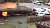 Footage shows cat being attacked