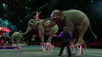 تعطیلی یکی از قدیمی ترین سیرک های جهان