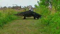Jacaré gigante é filmado durante passeio na Flórida