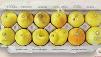 الليمون لشرح أعراض سرطان الثدي