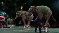 146 il fəaliyyət göstərən sirk niyə bağlanır?