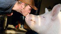 The 'micro-pig' now heavier than a female polar bear
