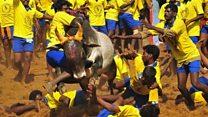 ஜல்லிக்கட்டில் சூதாட்டம் நடக்கிறது: விலங்குகள் நல ஆர்வலர் ராதா ராஜன்