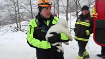 Resgate de cães anima equipes que buscam vítimas de avalanche na Itália