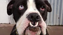 Fester the 'unique' dog seeks new home