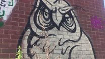 Your Questions: Mystery of graffiti owls