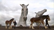 Horse that modelled for The Kelpies dies