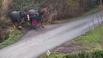 Van and horses near miss footage released