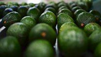Avocado anxiety over Trump's border tax