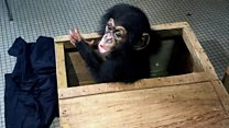 Chimp trade: Raid busts trafficking network