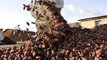အိုင်ဗရီကို့စ် ကိုကိုး စိုက်ပျိုးရေး အကြပ်အတည်း