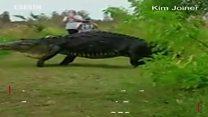 Сейилге чыккан крокодил
