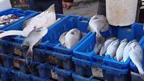 الأسماك المهربة تهدد صيادي غزة