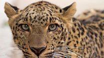 خطرے سے دوچار جنگلی حیات