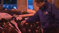 Dairy farmers 'far stronger as one voice'