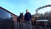 Rescue horses help ex-soldiers recovery