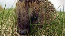 Can you help save the hedgehog?
