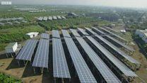 """台湾农民如何""""种植""""清洁能源?"""