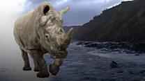 Beach rhino revealed by storm surge