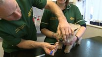 Dog poo DNA tests backed by MHK