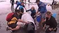 Волонтери рятують китів на березі