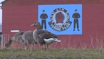 Hands off - The geese thriving on a Belfast housing estate