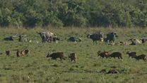 محیط بانان پارک ملی در آسام ۵۰ نفر را در سه سال گذشته کشته اند