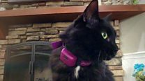 Tech gadgets for your cat reviewed