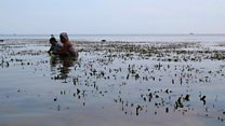 Marine health boosted by seagrasses