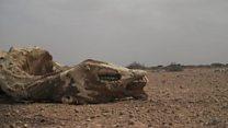 Somalie :  le spectre de la famille
