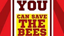 Make your garden a bee-utiful haven