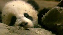Bao Bao the panda heads home to China