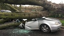 Car crushed by tree in London