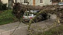 Tree crush driver in 'incredibly lucky' escape