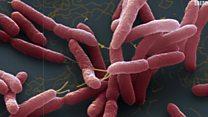 منظمة الصحة العالمية تدعو للإسراع بتصنيع مضادات حيوية جديدة لمكافحة الجراثيم الأشد فتكا