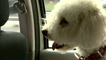 The taxi service for animal passengers