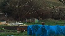 Deer trapped in allotments