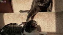 Webcam cho mèo