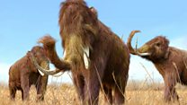 Why did woolly mammoths die out?