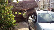 Tree falls onto the pavement