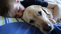 'Guardian angel' autism dog Caddie makes Crufts finals
